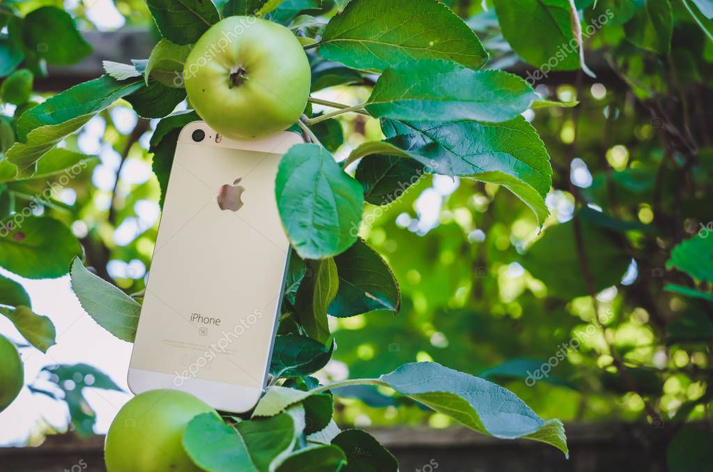 HALMSTAD, SWEDEN - AUGUST 9, 2018: concept image of new white or silver apple iphone SE on real apple tree with ripe fruits in the garden. Selective focus, blurred background