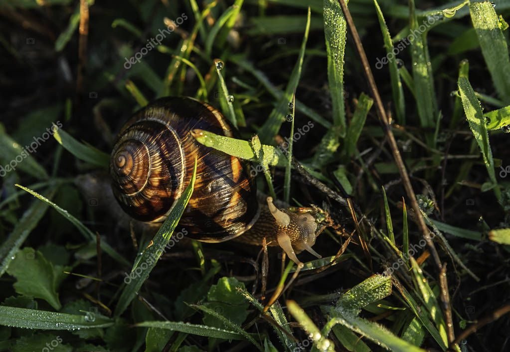snail over green grass during daytime