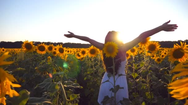 Young girl standing at the field of sunflowers and raising her hands up. Woman enjoy by landscape and freedom at the meadow. Rear back view Slow motion Close up