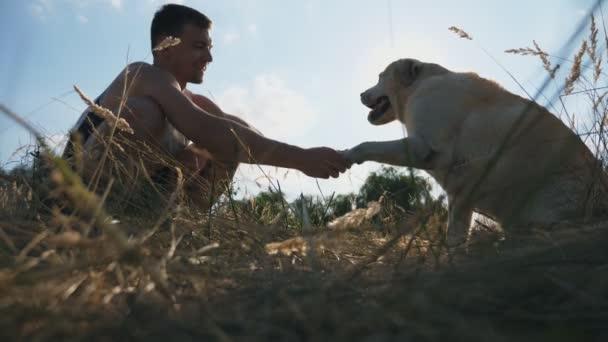 Labradorský nebo zlatý retrívr sedí na trávě a dává tlapku majitelce mužské. Muž vlaky pes venku. Přátelství s domácí zvíře. Sunshine v pozadí. Boční pohled zpomalené Detailní záběr