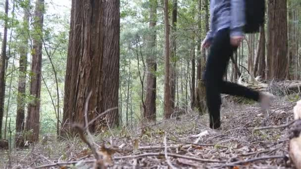 Feet of young woman tourist with backpack walking in forest. Legs of female backpacker going through the wood during summer vacation travel. Girl hiking at nature alone. Concept of active lifestyle