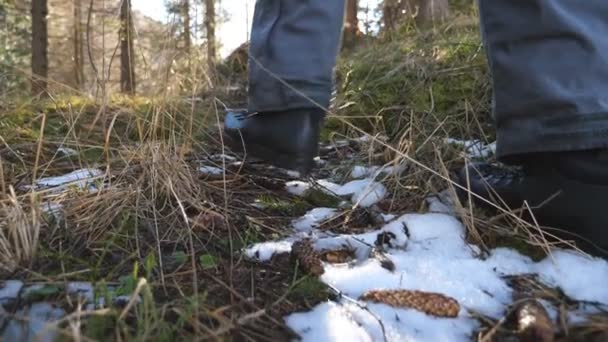 Feet of unrecognizable male tourist walking on beautiful mountain pine forest on sunny day. Young hiker going on path in pinery at early spring. Concept of travel. Rear back view Close up Slow motion
