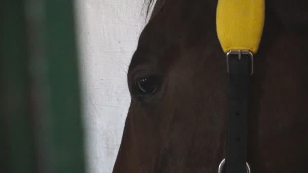 Zblízka oko krásného hnědého koně. Pohled na plnokrevníka stojícího ve stáji. Smutné zvíře hledící do kamery. Zpomalený pohyb