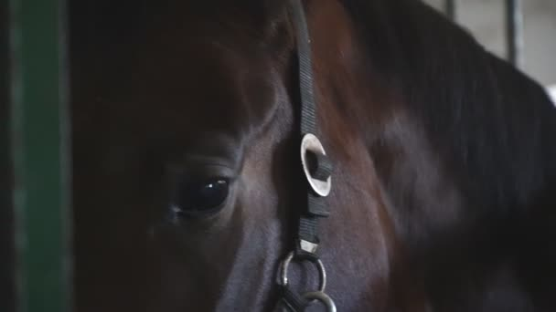 Close up eye of beautiful brown horse. View on thoroughbred horse muzzle standing in stable. Sad animal looking into camera. Slow motion