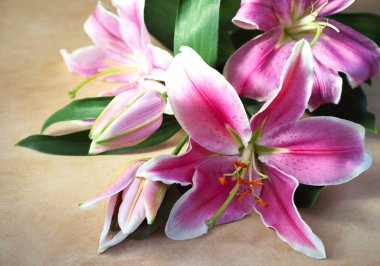 Top view on tender bouquet of pink lilies lies on natural color board, Valentines Day background, wedding day, Happy Birthday. Horizontal