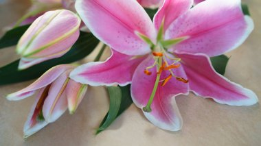 Bouquet of pink lily flower lies on natural color board, Valentines Day, wedding day, Happy Birthday.