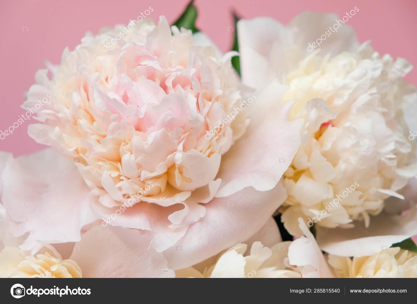 Beautiful White Peony Bouquet Close Up Stock Photo Image By C Photodiod Gmail Com 285815540