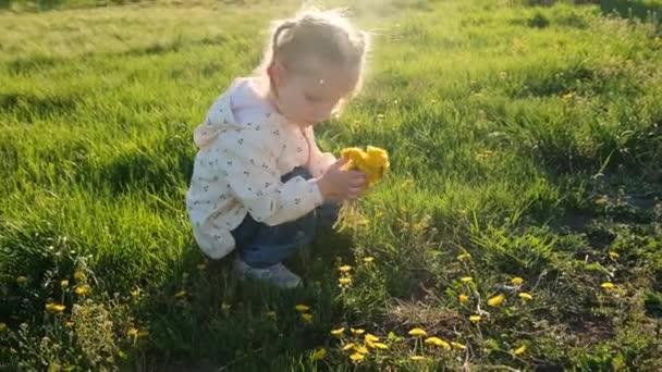 Kleines Mädchen auf der Wiese pflückt an einem sonnigen Sommertag gelbe Löwenzahnblüten. Frühling