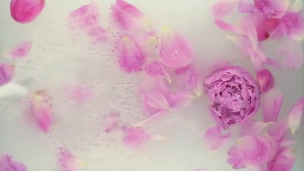 Pink peony in milk water. Beauty spa and wellness treatment with flower petals in bath with milk. The concept of purity, tenderness, freshness, youth. Summer mood. Copy space, flat lay.