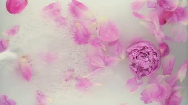 Rózsaszín bazsarózsa tejben. Szépségfürdő és wellness kezelés virágszirmokkal a tejes fürdőben. A tisztaság, gyengédség, frissesség, ifjúság fogalma. Nyári hangulat. Fénymásoló, lapos fekvésű.