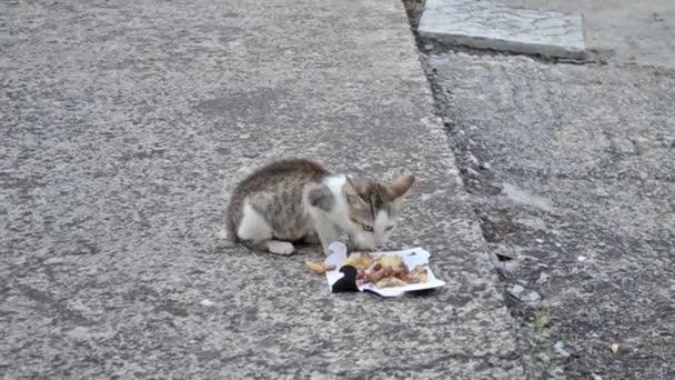 az udvaron-kisállat video-szürke kiscica imádnivaló cica étkezés
