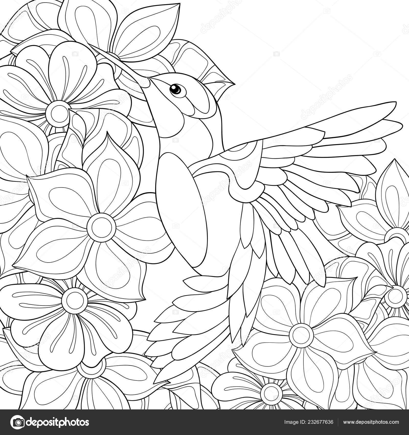 мило колибри фоне цветов изображения отдыха активность