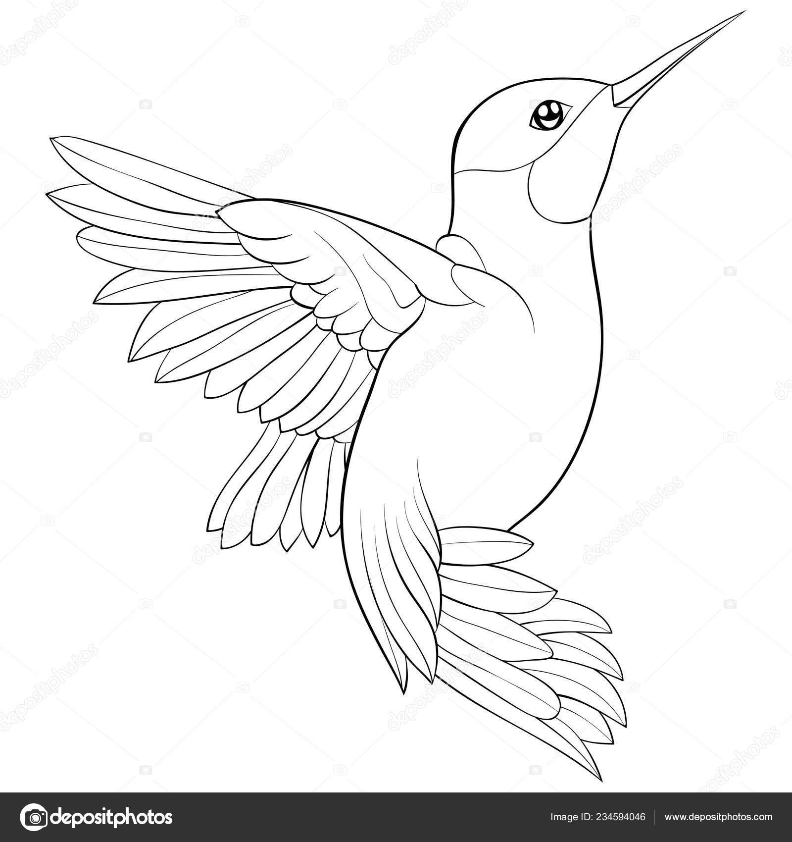 милые летающие образ колибри отдыха книжка раскраска