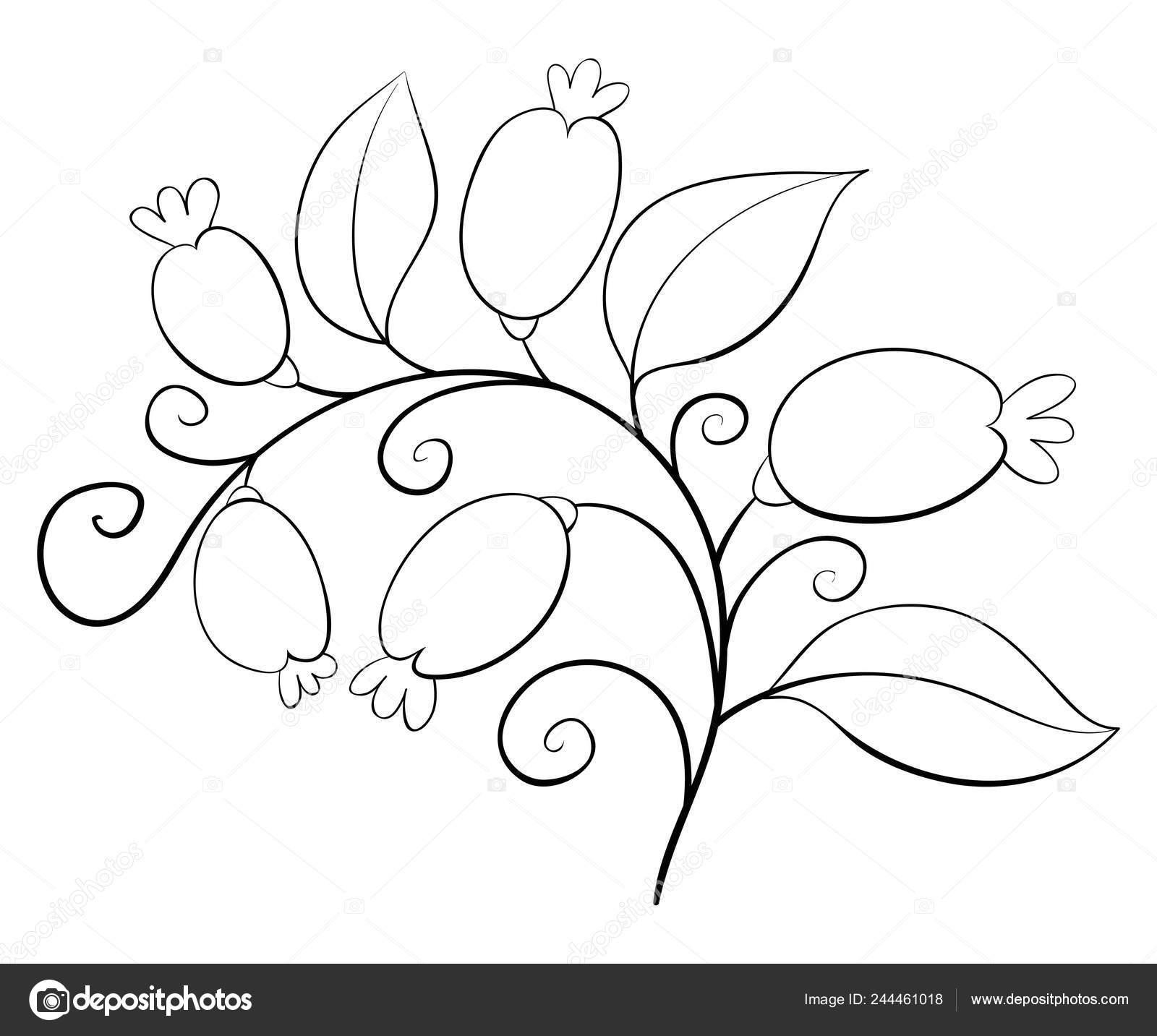 абстрактная цветок лепестки листья ягоды изображения отдыха