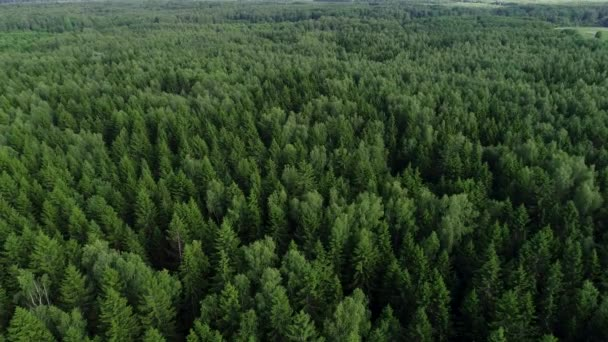 4k Hd Aerial View Camera Moves Rising Up From Green Forest Stock Video C Gorov108 201443344