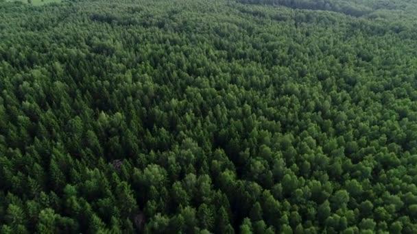 4 k Hd légifelvételek kamera mozog a zöld erdő emelkedik.