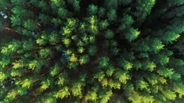 Krásné ráno zelený les. Pohled z vrcholu stromů, stany, auta.