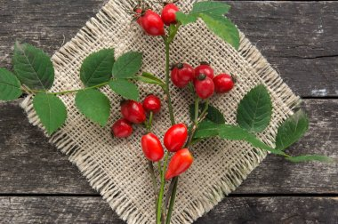 Dog rose with bunch branch Rosehips, types Rosa canina hips. Medicinal plants and herbs composition