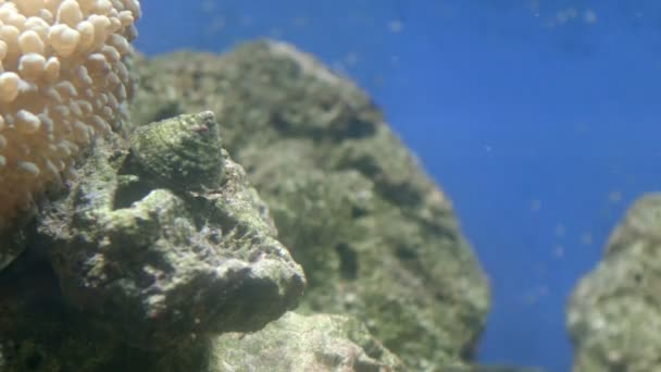 Various fish swimming in aquarium