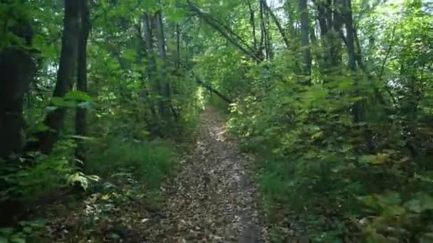 Track in the forest in move