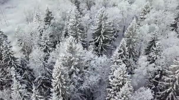 Zimní sezóna zasněženém lese letecký snímek. Přírodní scenérií, mražené lesní