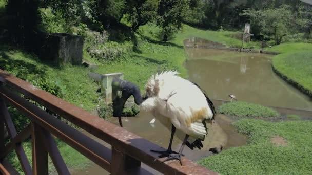 černé a bílé Ibis sedí na zábradlí mostu
