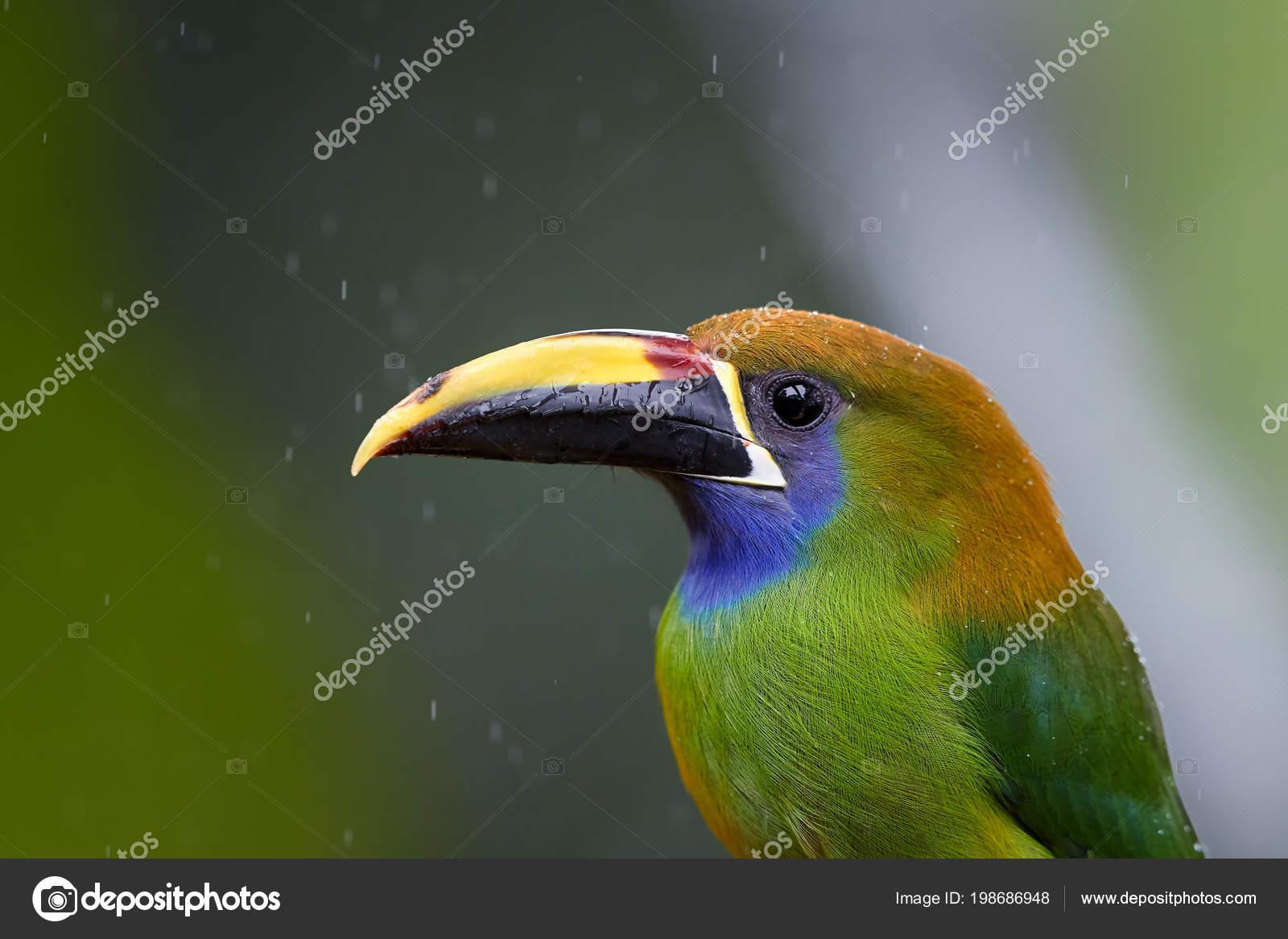 Τεράστιο πουλί εικόνες