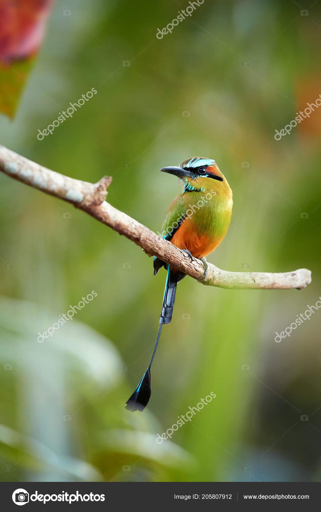 μεγάλο υγρό πουλί φωτογραφίες
