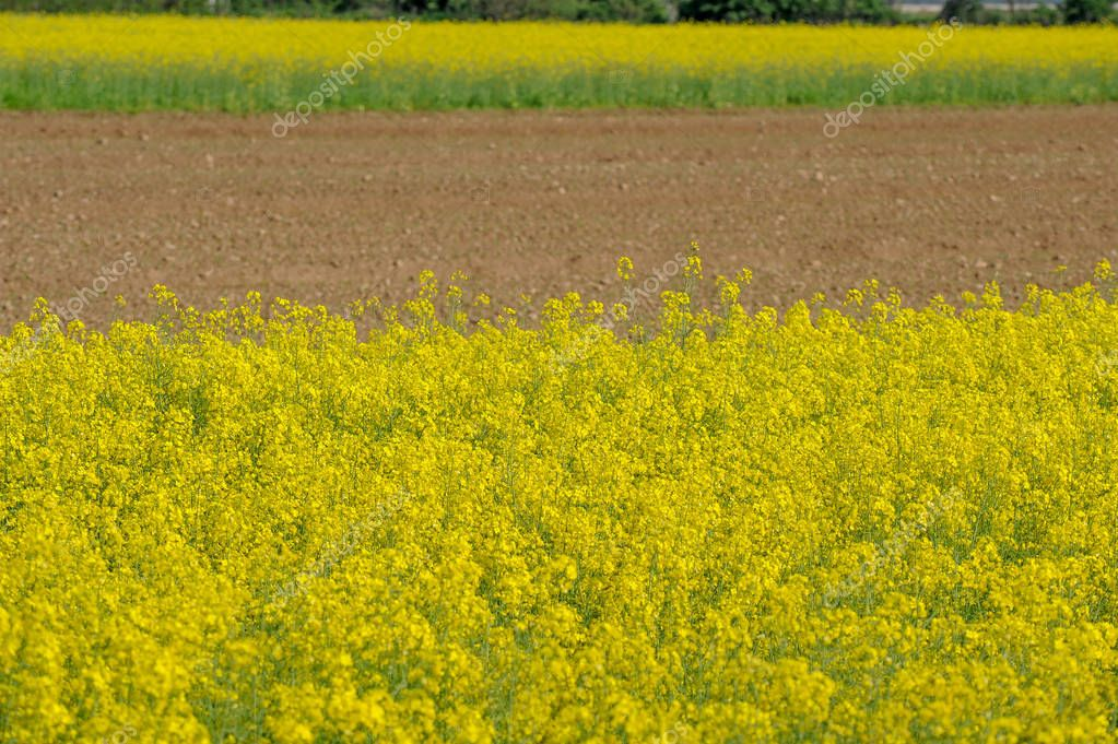 plowed field in spring with coulis