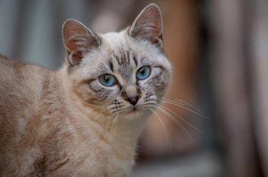 tender look of kittens to wean