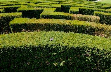 labyrinth in botanical garden
