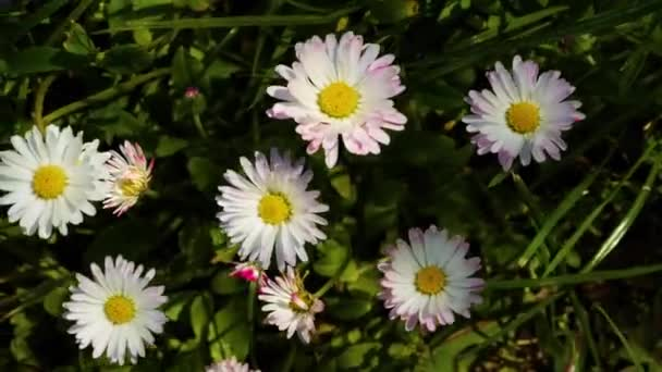 Small flowers sway from the wind.Close-up of flowers.Top view.