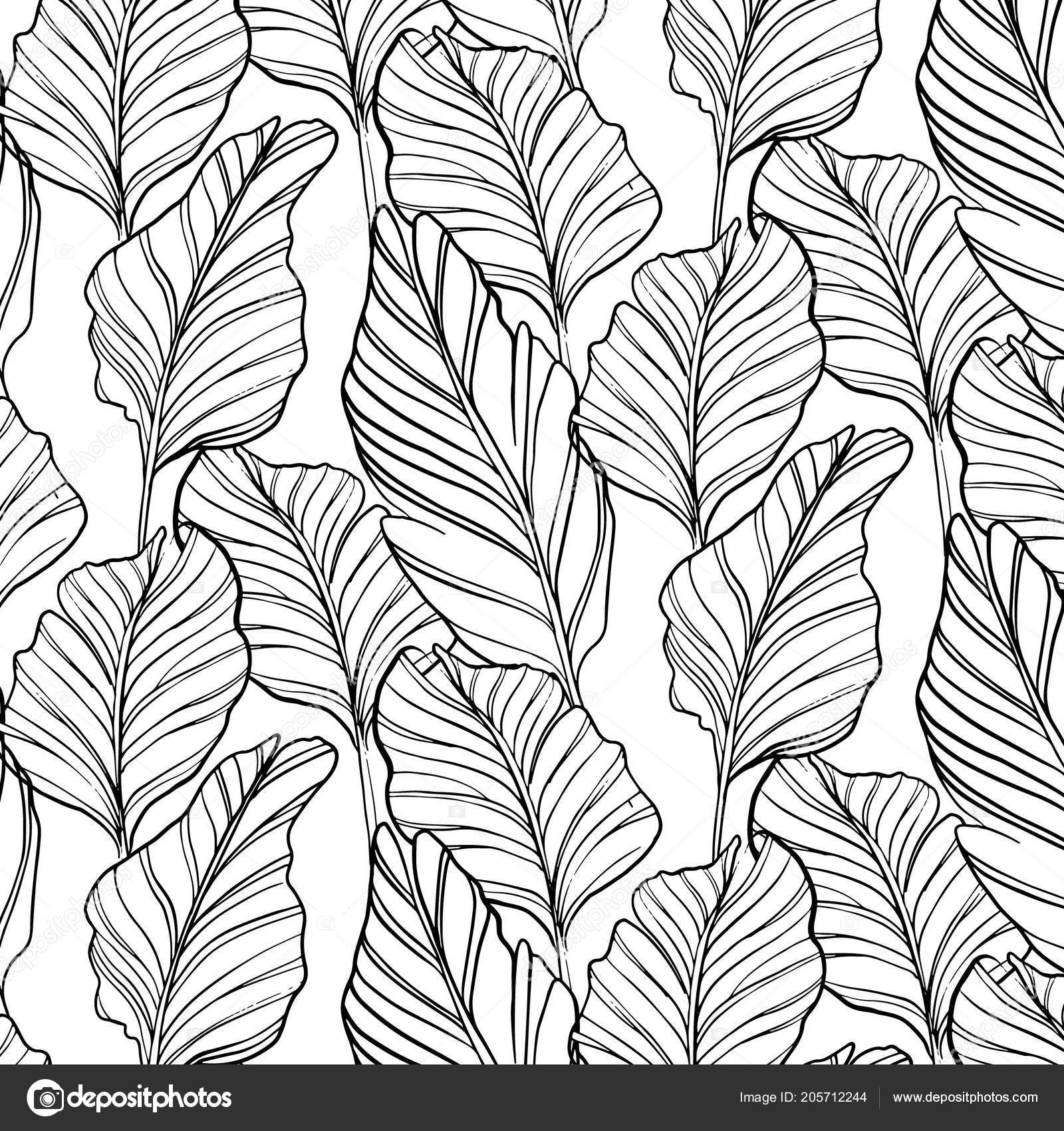 Tropical Seamless Pattern Nature Leaf Hand Drawn Black Art