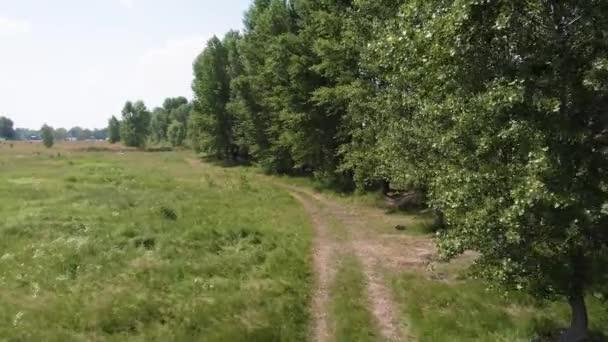 Létající nad pěšinou v zeleném poli plném trávy a květin poblíž velkých stromů. Horký letní den venku.