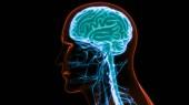 modern digital illustration of human brain