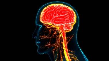 Modern digital illustration of human brain stock vector