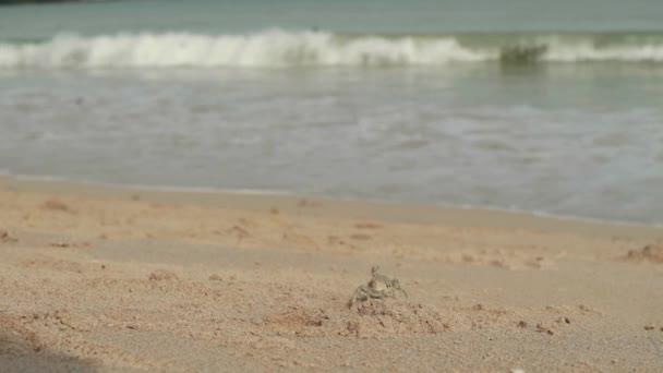 krajina s vlnami na písečné pobřeží. zamračená obloha a tropické pláže. kraby procházet podél pobřeží