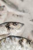 friss, mélyhűtött tengeri hal a jégen. Friss tengeri halból készült a piacon megjelenik egy vastag ágyon friss jég, hogy nem olvadó, hogy megtartja a természetes íz, és a természetes megjelenés. Függőleges fénykép.