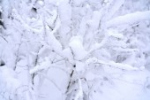 Photo Snow covered branches in winter forest