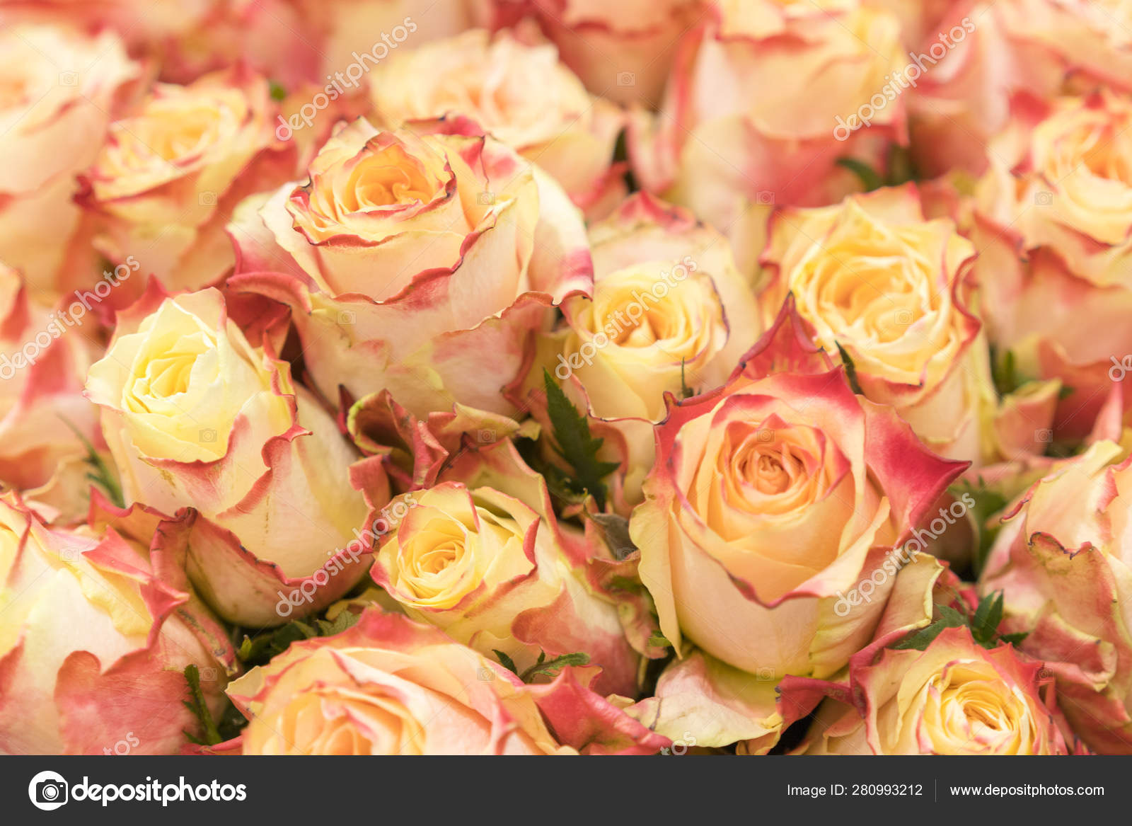 background of pink orange and peach roses natural background of fresh roses soft focus stock photo c colt kiev mail ru 280993212 https depositphotos com 280993212 stock photo background of pink orange and html