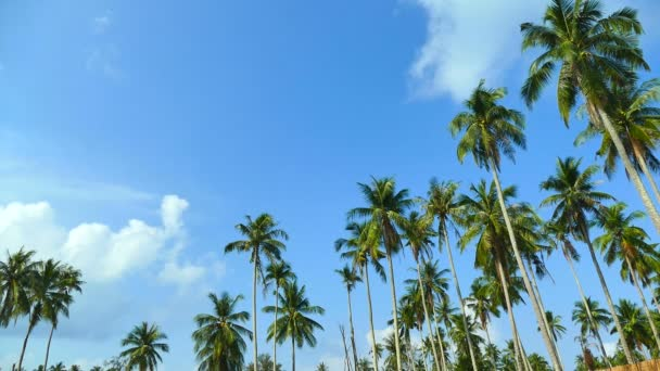 landscape with tropical palm trees against blue sky on a sunny day