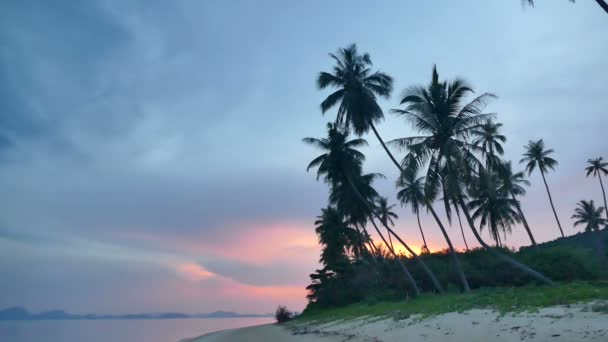 amazing view of sea, palm trees and dramatic sunset sky