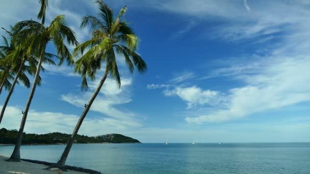 Tropická Pláž s dvěma palmovými stromy