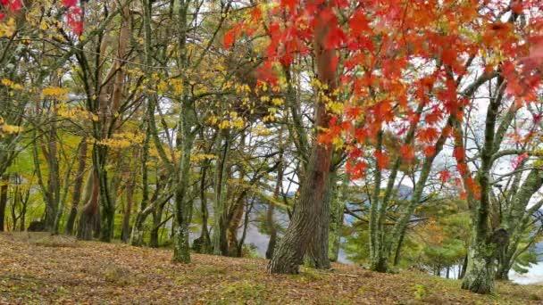 větve s červeným podzimní listy