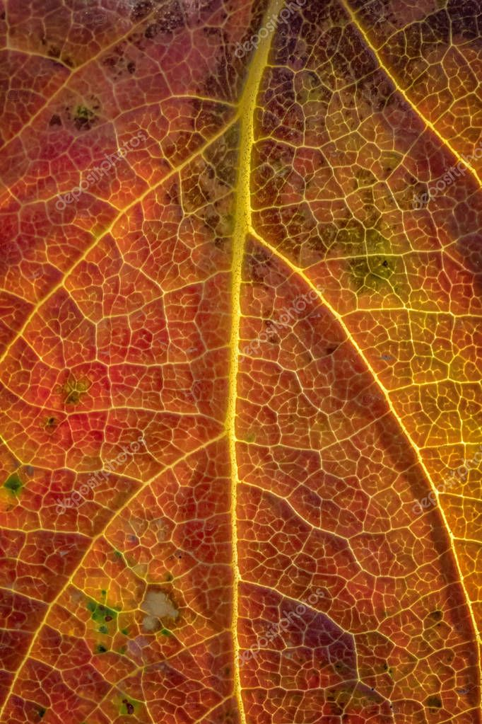 Background of a colorful autumn leaf. Close-up