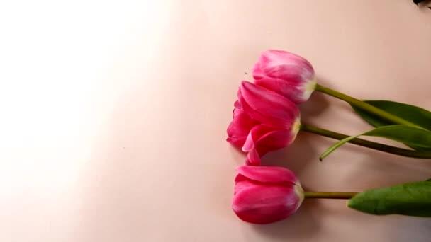 Lapos laikus rózsaszín háttér, szép piros tulipán. Virág értékesítési koncepció