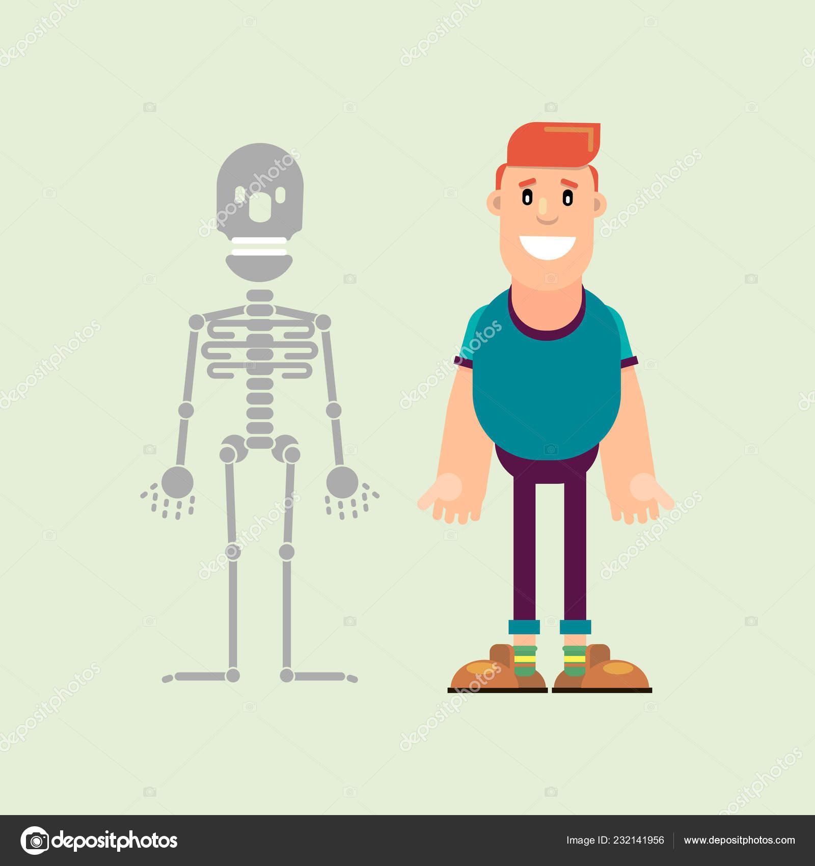 Man Male Skeleton Visual Aid Human Anatomy Vector