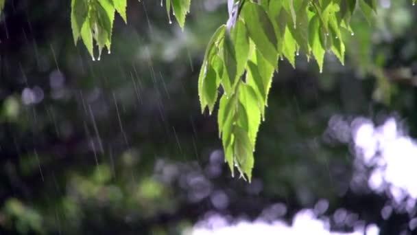 foglie verdi con le gocce che cadono