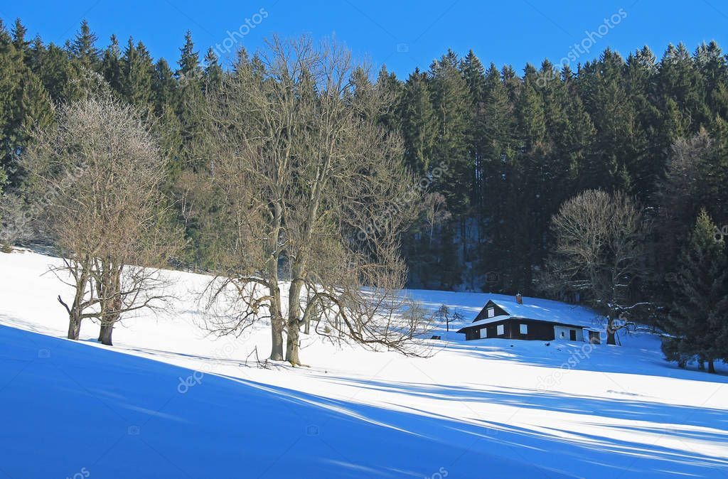 old cottage, some bare trees and spruce forest on sunny winter day, Beskydy mountains, Czech Republic