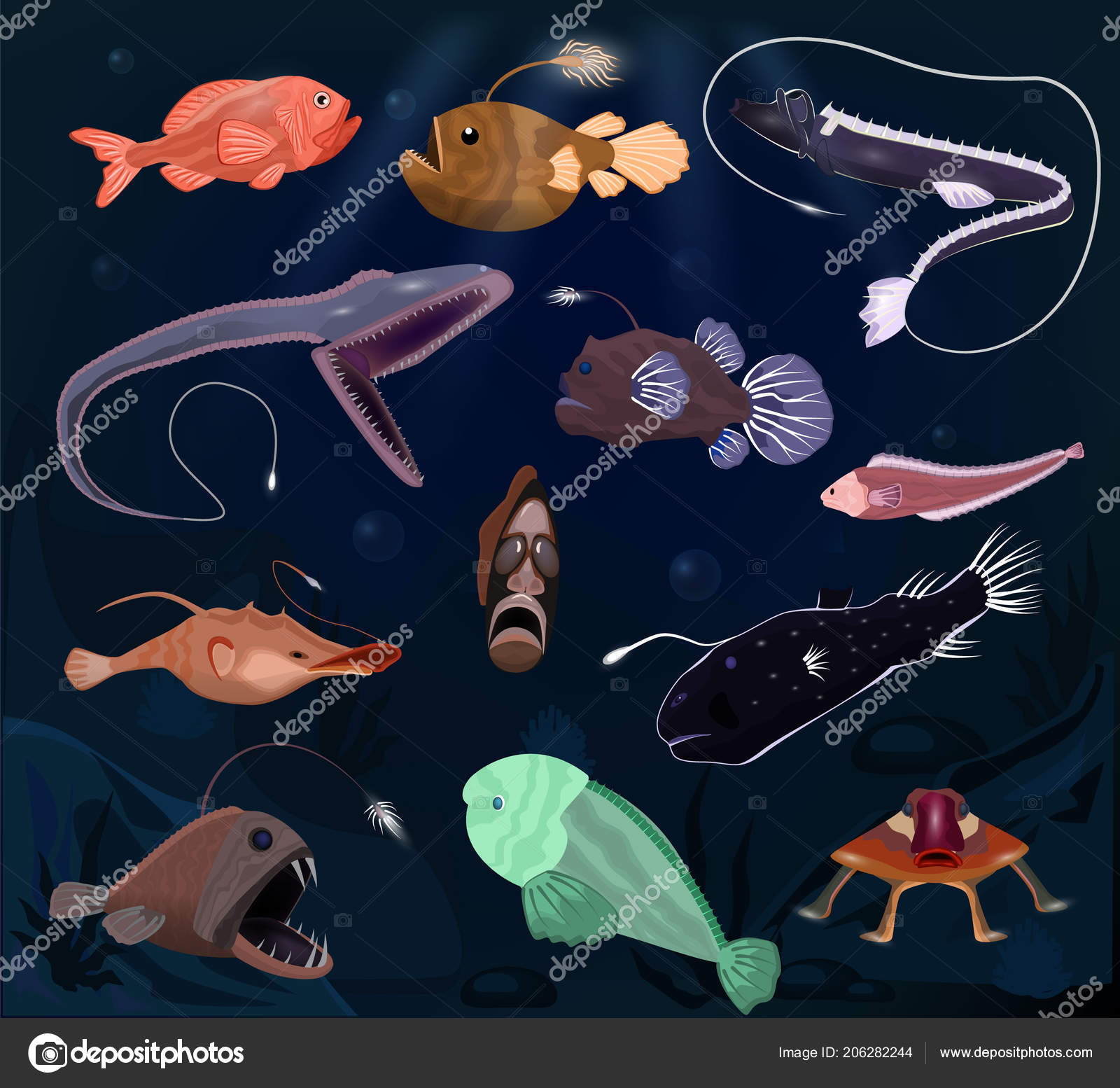 Angler fishes